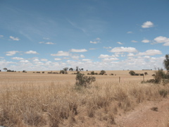 Paddocks of stubble lined the dirt road