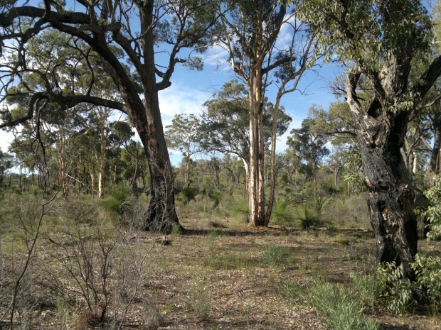 In the Wandoo Conservation Park