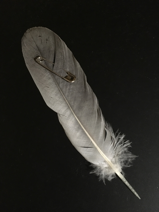 Pale grey feather with a safety pin through it on black background